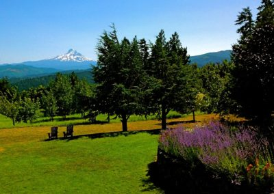 Great Lawn and Mt