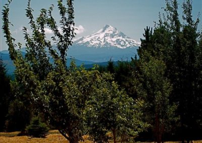 Mount Hood From House